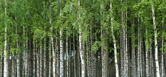 pefc certificato legno